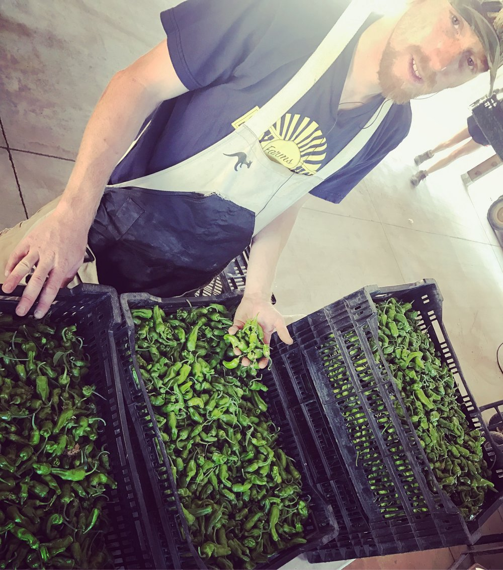 Come Say Hay to Collin, these padron peppers, and the rest of the crew this Saturday at our annual Say Hay Day!