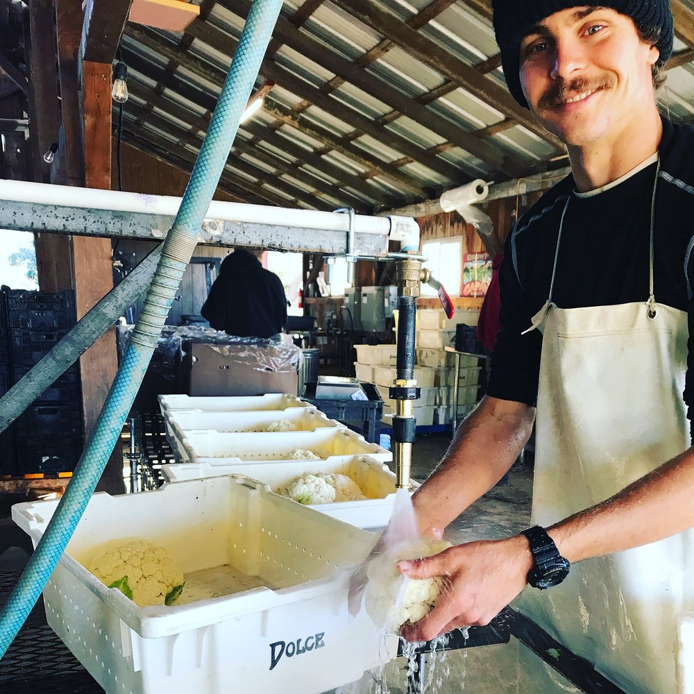 Sammie on the cauliflower packing line.  Meet him at our Saturday Oakland Grand Lake market!