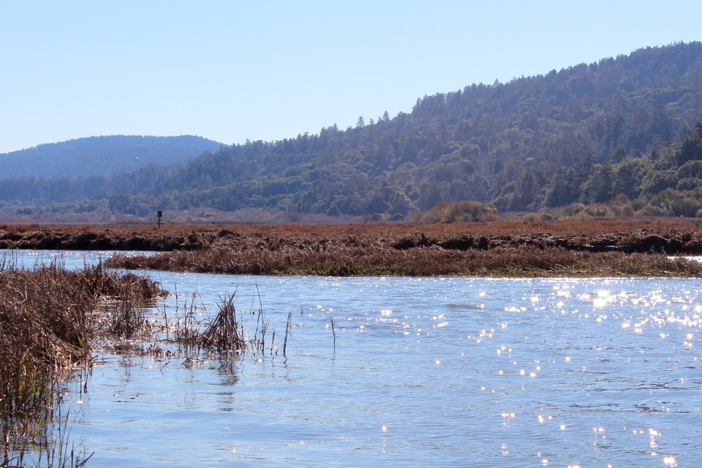 Tomales Bay trail