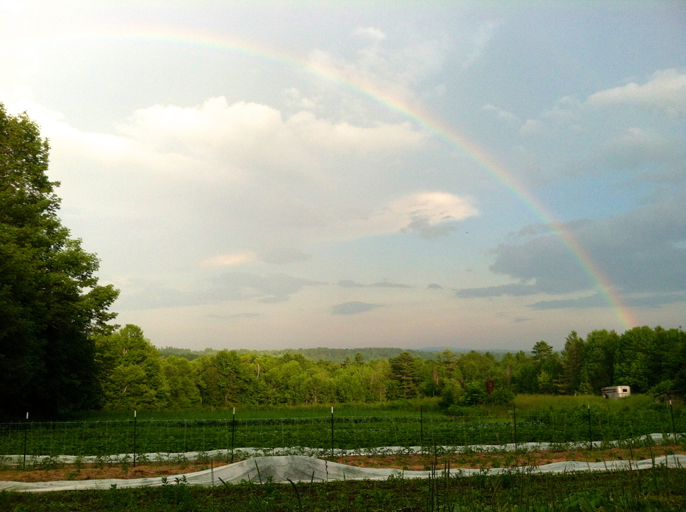 garden arced by rainbow. after one of those thunderboomers.
