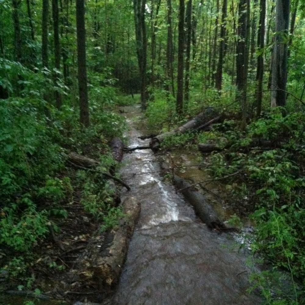 swollen stream.