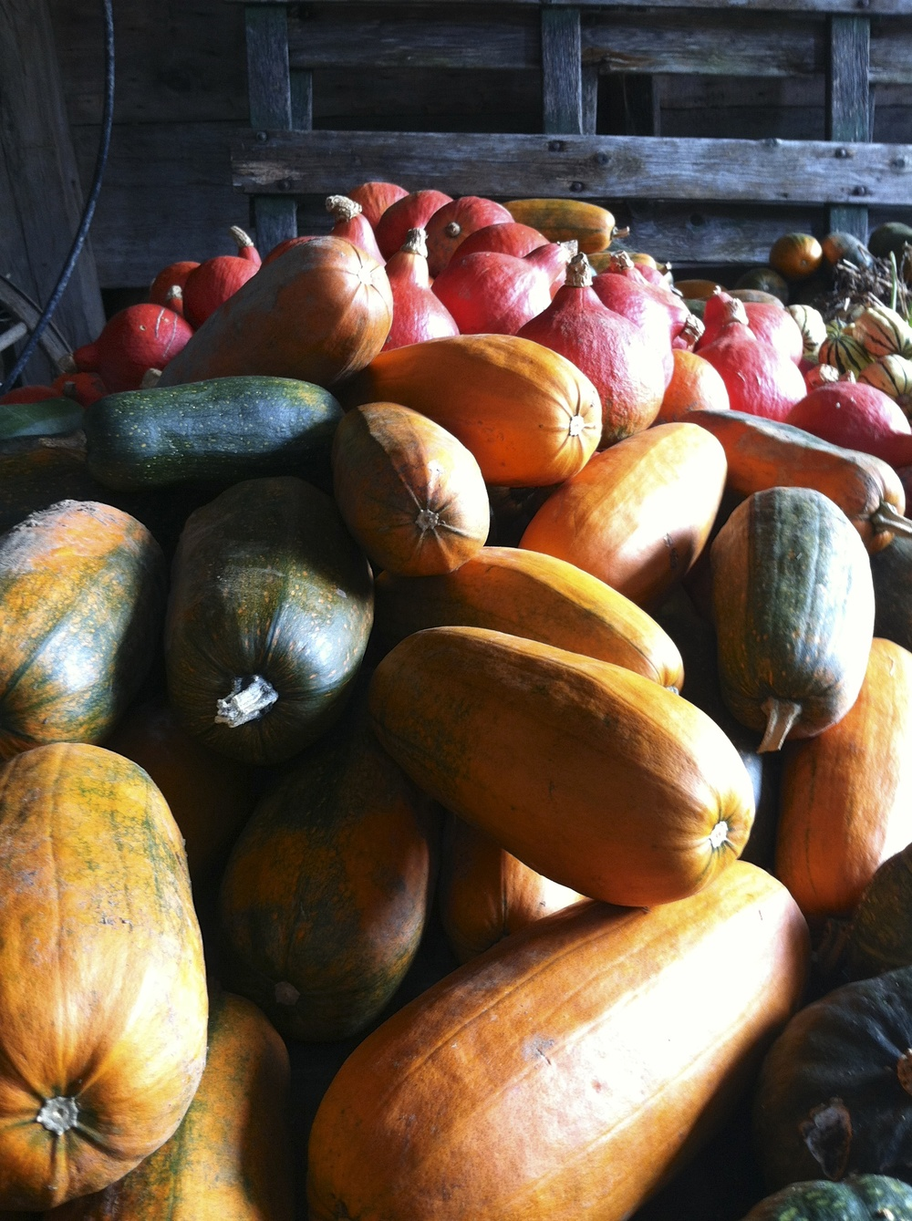 And the beginning of what falls gives us: Squash upon squash.