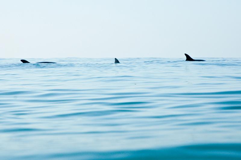 0511_dolphins_001.jpg