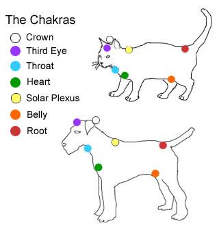 catDogChakras.jpg