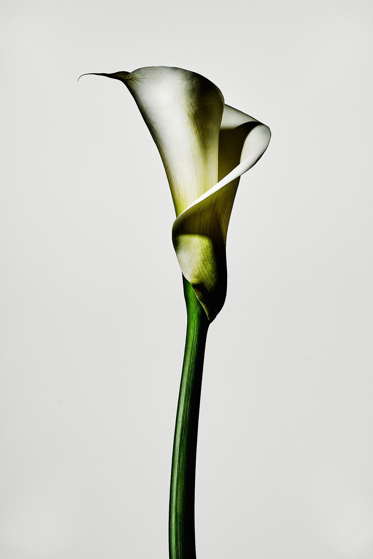 ThingsIlikeonwhite_flowers0027 1.jpg