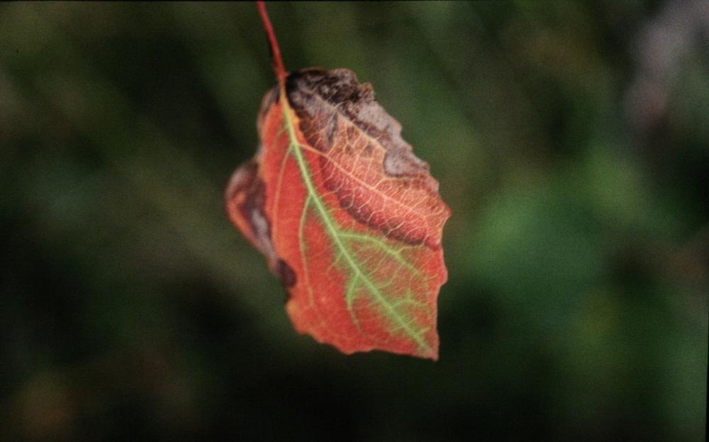 Herbst Blatt.jpg