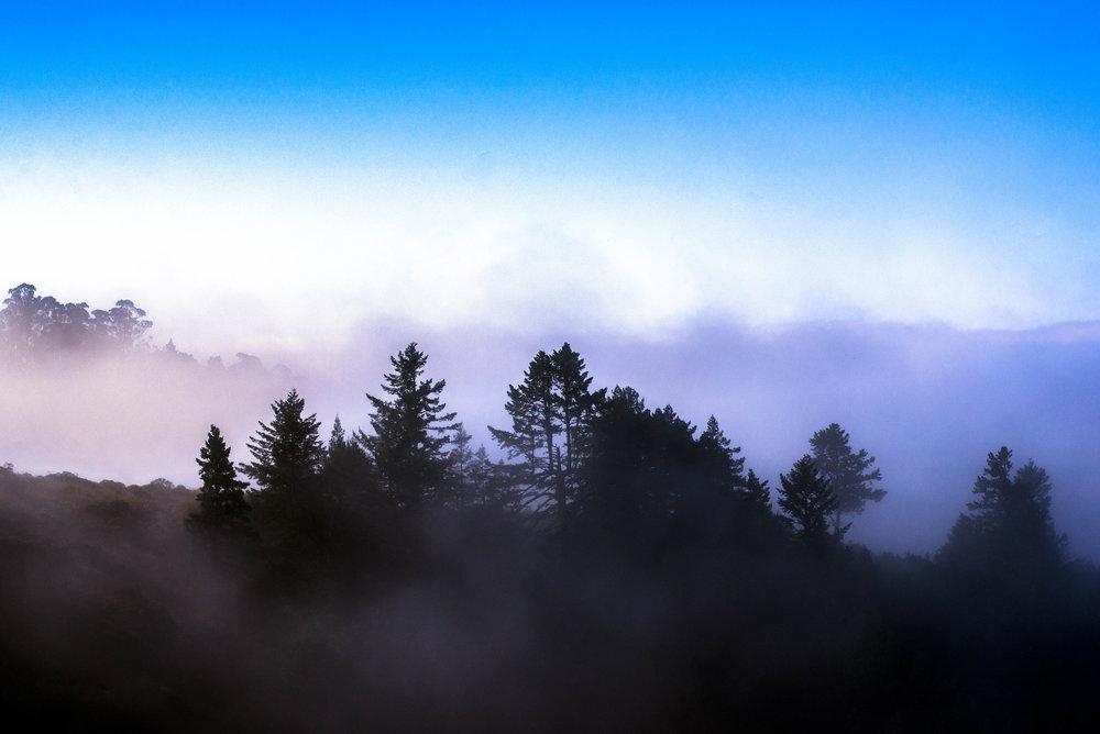 Mt Tam, CA