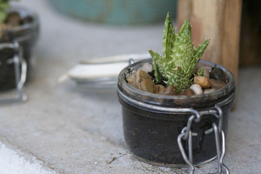 Small Jar Plant 2.jpg
