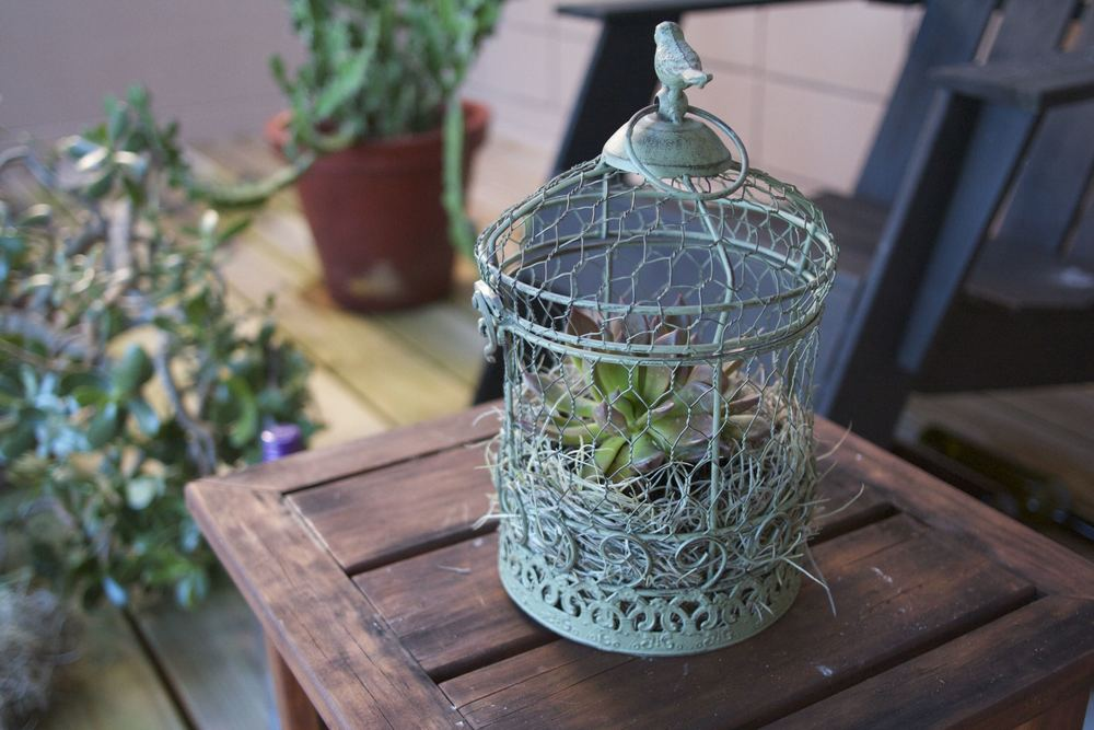 Bird Cage Succulent Holder