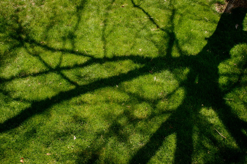 Shadows on the lawn.  A rare sunny day.