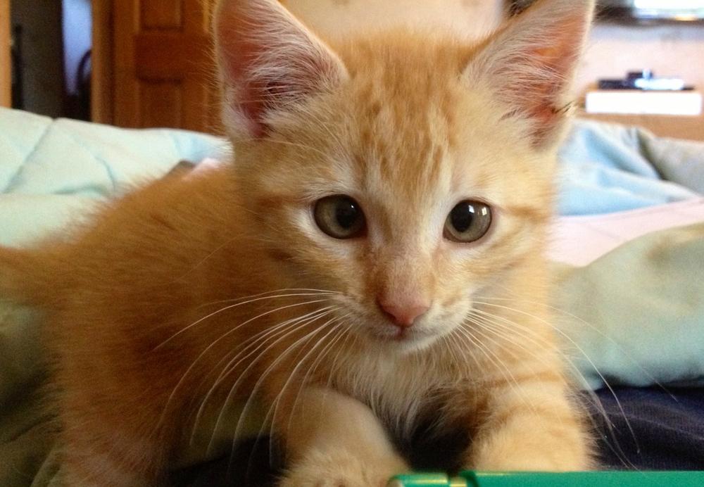 2013-05-17 GPC Kitten 1.jpg