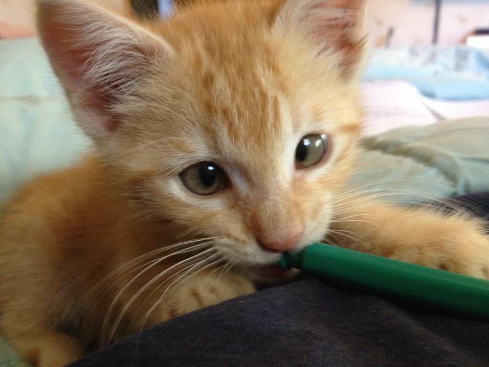 2013-05-17 GPC Kitten 2.jpg