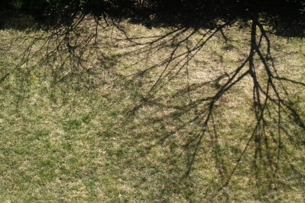 bare lawn.jpg