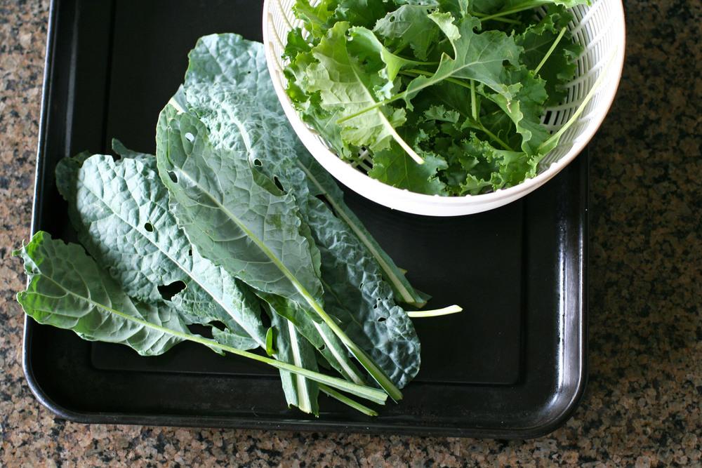 kale ready.jpg