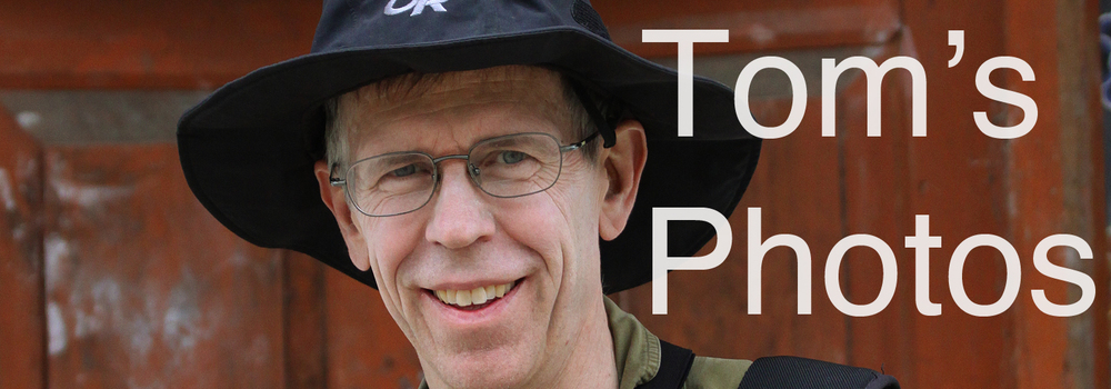 tomphotoplaceholder3.jpg