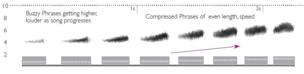 Prairie Warbler Sonogram