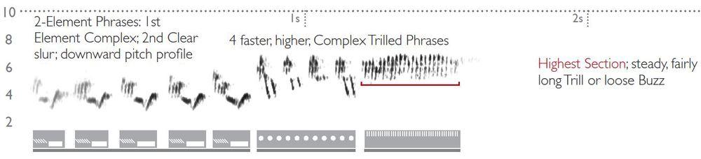 Cerulean Warbler Sonogram
