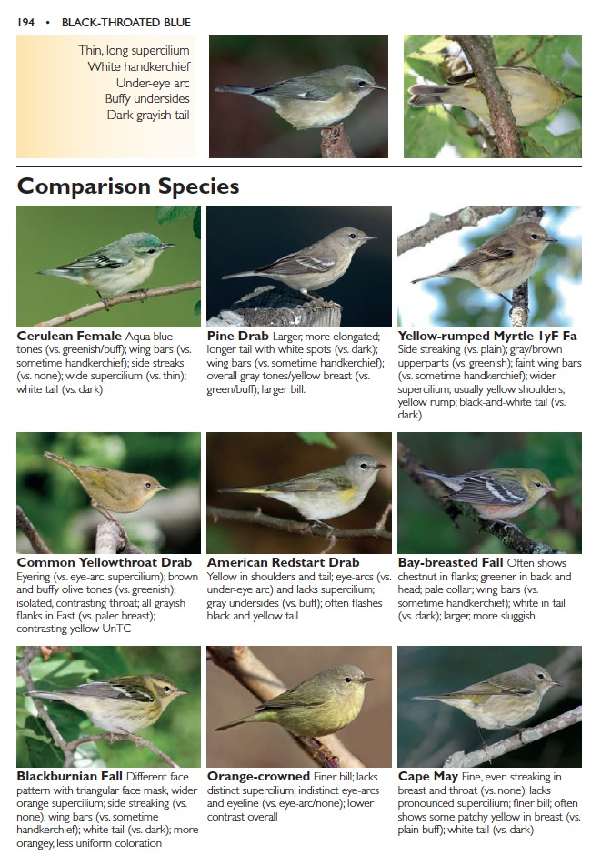 Our comparison pages show that this is indeed a female Black-throated Blue Warbler.