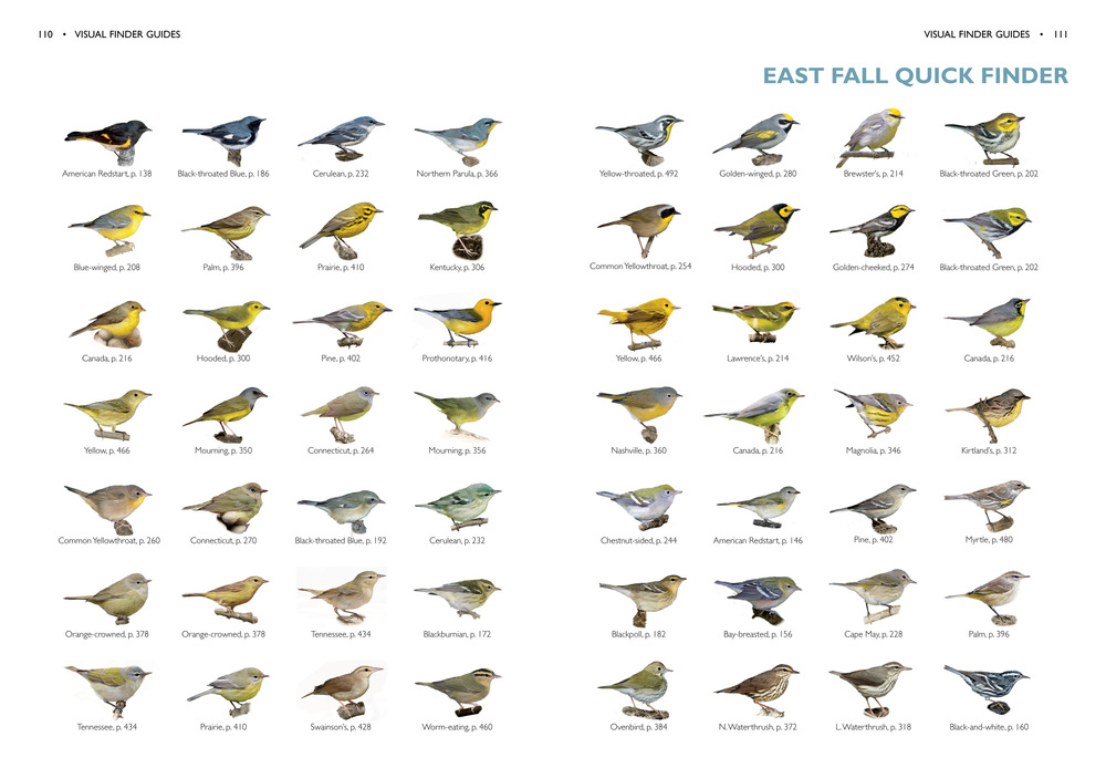 The finders show a number of yellow birds - what else can we look for?