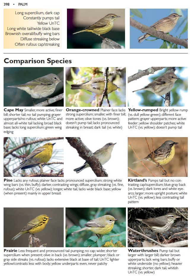 Our Palm Warbler comparison page confirms the ID.