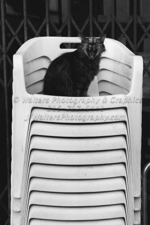 Cat_8163_10A.jpg