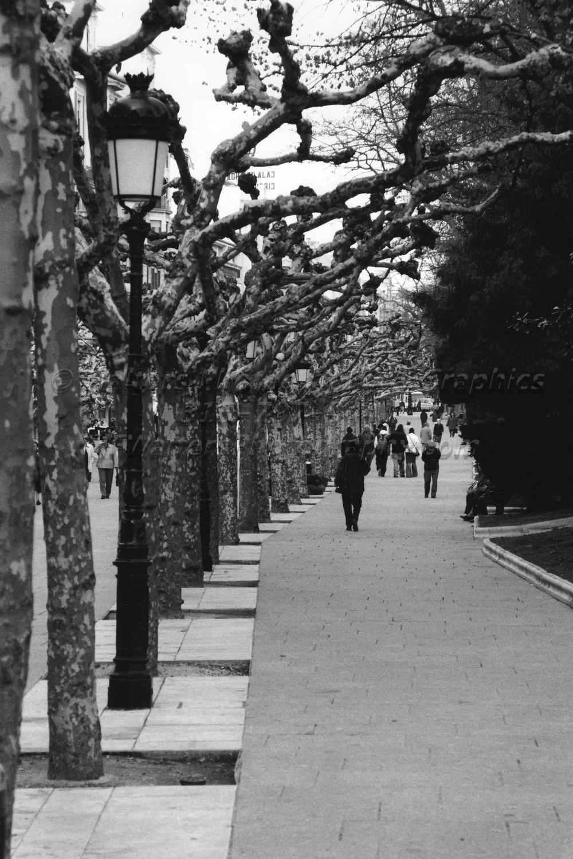 Street_Scene_3325_28A.jpg