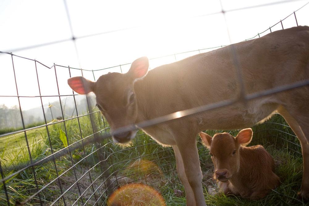 Farmsteaders-5.jpg