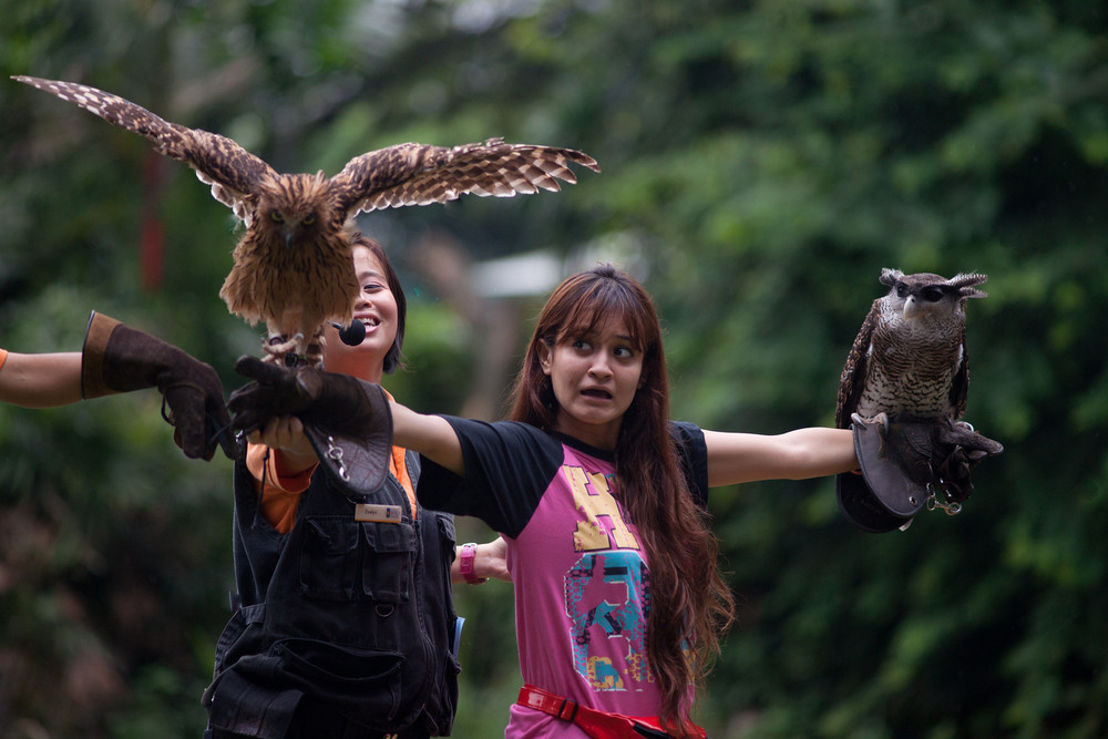 "A girl volunteers to be part of the ""Birds of Prey"" show in Jurong Bird Park (Singapore)"