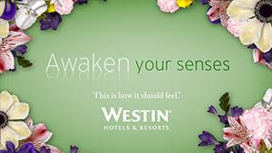 Westin  Senses   Westin | Razorfish