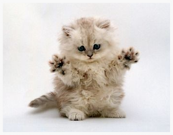 Right, this isn't me. It's a cat. With jazz hands. A pic of moi coming...at some point.