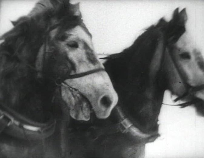 Talking Horses.jpg