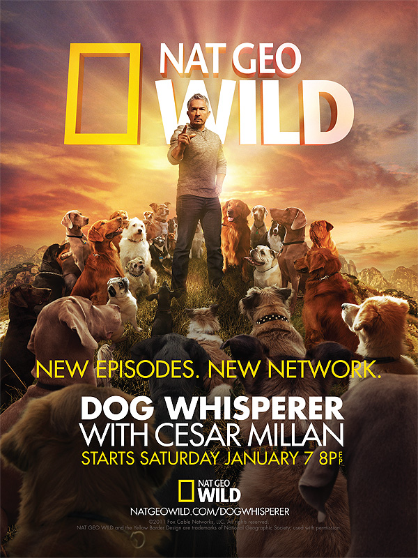 Dog Whisperer Key Art