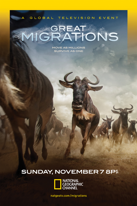 Great Migrations- Wildebeests
