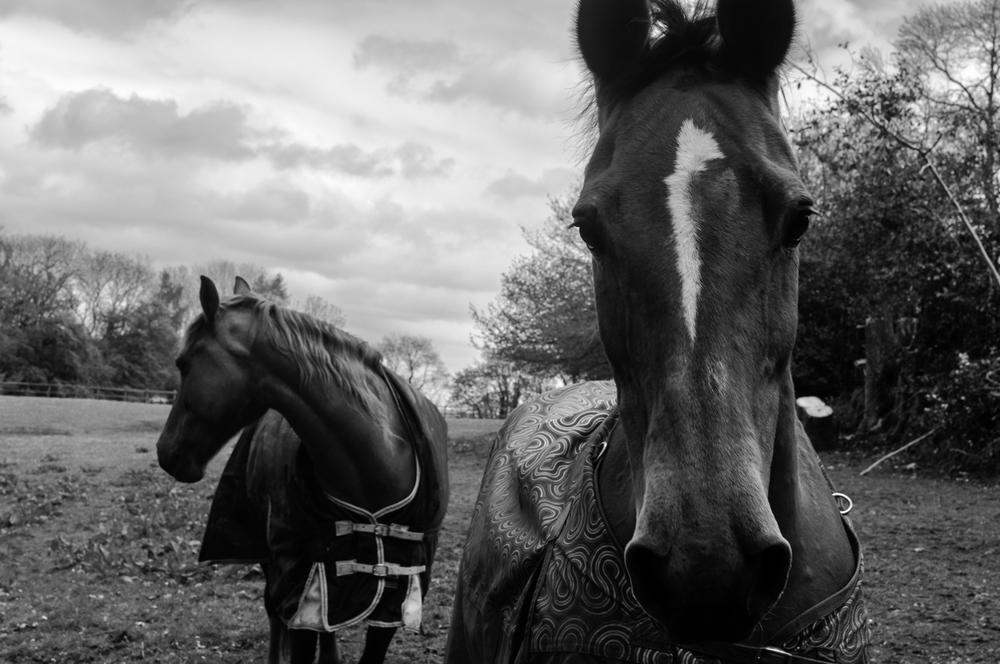 Somerset horse-1.jpg