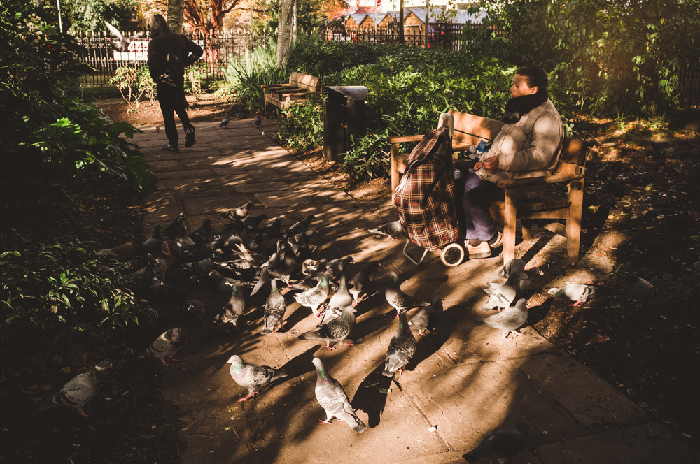 pigeonladyotp.jpg