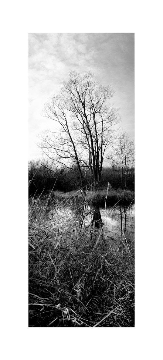 arbre vertic 110x50.jpg