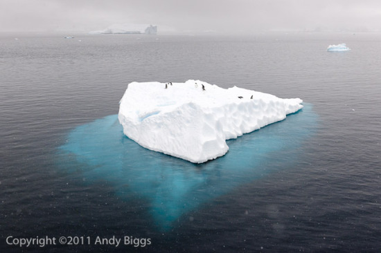 Iceberg, Penguins and Snow