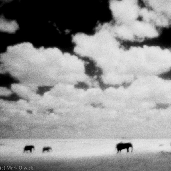 Three Elephants, Botswana.jpg