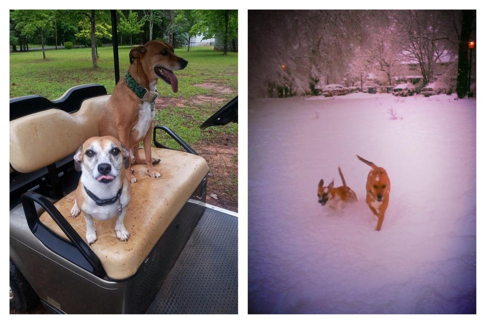 Boo & Lu chillin' at the lake on vacation with their Grammy & having a  blast  in the snow!