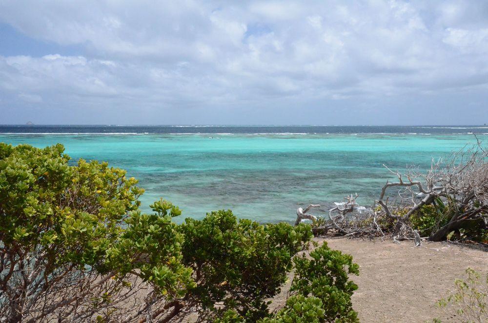 Tobago Cays 4.jpg