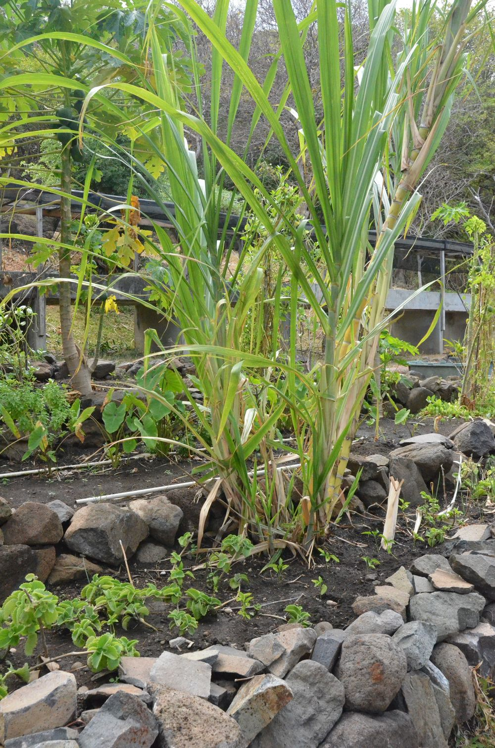 Firefly Herb Garden.jpg