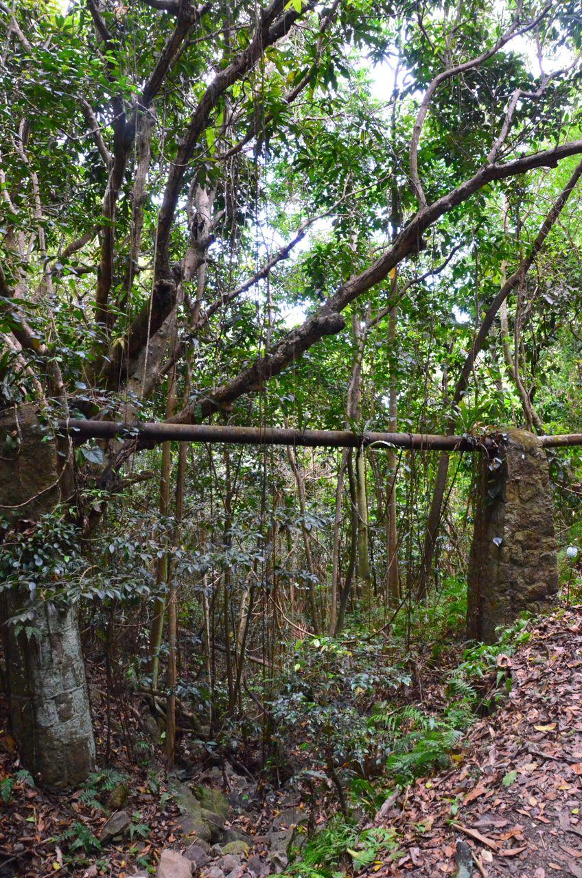 Mt Nevis Hike 2.jpg