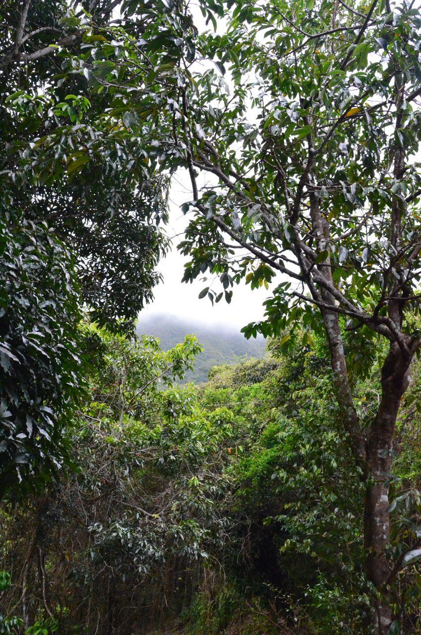 Mt Nevis Hike 4.jpg
