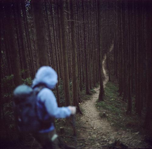 walk forest.jpg