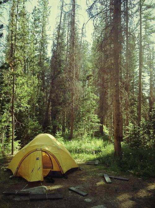 tent in the trees.jpg