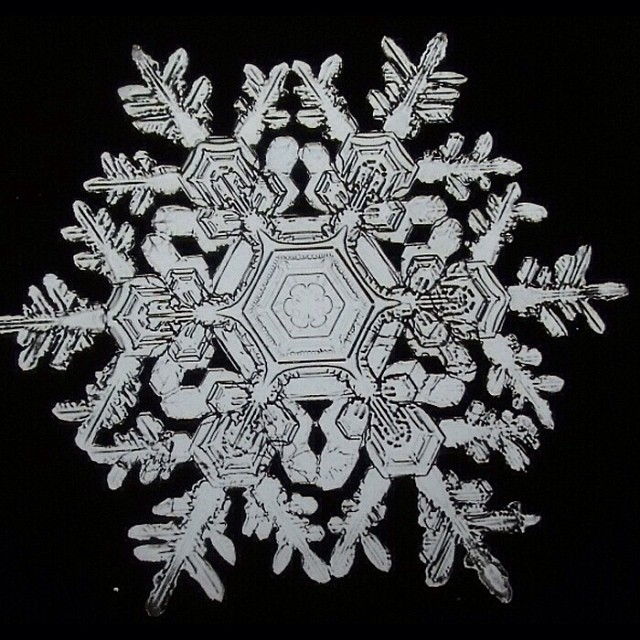 "Today I am starting a 3 day episode - because some things need more than one post to explain. This week it is SNOWFLAKE BATTLES. We start with Wilson Bentley (1865 – 1931), one of the first known photographers of snowflakes. He perfected a process of catching flakes on black velvet in such a way that their images could be captured before they melted. He first became interested in snow crystals as a teenager on his family farm. He tried to draw what he saw through an old microscope given to him by his mother when he was fifteen. The snowflakes were too complex to record before they melted, so he attached a bellows camera to a compound microscope and, after much experimentation, photographed his first snowflake on January 15, 1885. He would capture more than 5,000 images of crystals in his lifetime. Bentley's work gained attention after his work was first published in a magazine by Henry Crocker of Fairfax, Vermont; who consequently ended up with the largest private collection of Bentley's works. In collaboration with George Henry Perkins, professor of natural history at the University of Vermont, Bentley published an article in which he argued that no two snowflakes were alike. This concept caught the public imagination and he published other articles in magazines, including National Geographic, Nature, Popular Science, and Scientific American. In 1931 Bentley worked with William J. Humphreys of the U.S. Weather Bureau to publish Snow Crystals, illustrated with 2,500 photographs. His other publications include the entry on ""snow"" in the fourteenth Edition of Encyclopædia Britannica. Bentley also photographed all forms of ice and natural water formations including clouds and fog. He was the first American to record raindrop sizes and was one of the first cloud physicists. After walking home six miles in a blizzard, Bentley died of pneumonia at his farm on December 23, 1931. Bentley was memorialized in the naming of a science center in his memory at Johnson State College in Johnson, Vermont. Shortly before his death, his book Snow Crystals was published by McGraw/Hill and is still in print today."