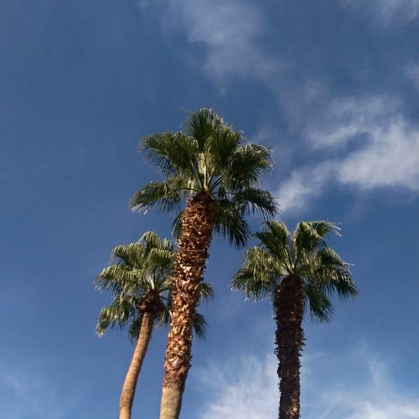 Palm Trees Wild Mae.jpg