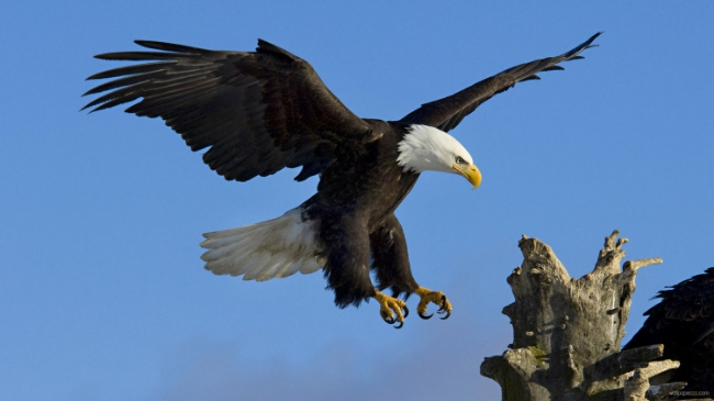 Eagle-13-Wallpaper-Background-Hd.jpg