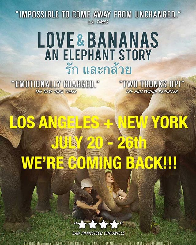 "Due to an overwhelming response by sold out audiences and critics, @loveandbananasmovie is returning to theaters from July 20-26th in LA and NY!!!! Join us on an elephant rescue! • TICKETS ON SALE NOW! LA – Arena Screen Hollywood  NY – Cinema Village • 100% of ticket sales goes to the @cambodiawildlifesanctuary to protect and save Asian elephants!! 🐘💕❤️🐘🙌🏻 • Love & Bananas is at 92% on Rotten Tomatoes! • REVIEWS : ""Impossible to come away from unchanged"" - LA Times ""Emotionally Charged"" - NY Times ""4 out of 4 stars, highest rating"" - SF Chronicle ""Two trunks up!"" - The Hollywood Reporter"