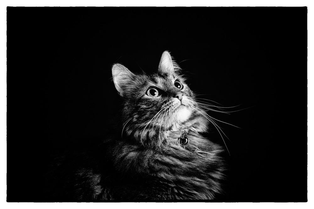 20131206_CatPortraits_0843-Edit.jpg